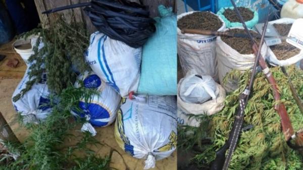 Plantação de maconha é erradicada em Camamu após operação conjunta da polícia baiana.