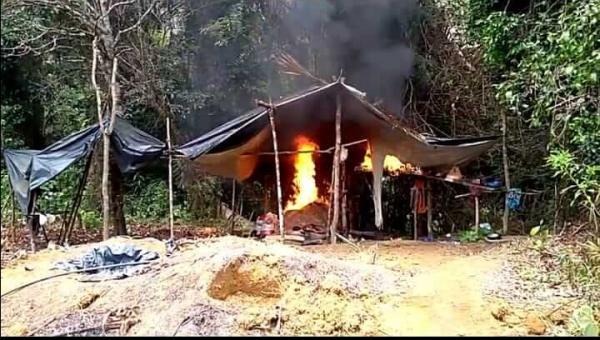 Policiais encontra 10 mil pés de maconha entre Gandu e Ibirapitanga