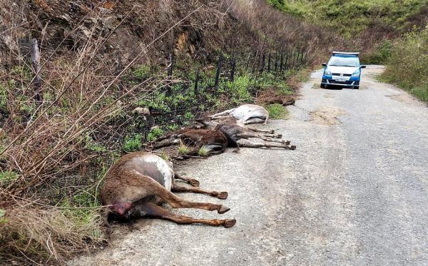 Adab a proibir Itapetinga de confinar jumentos para abate