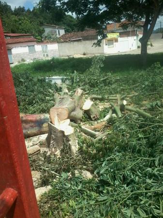 Leitor do Sulbahia1 denuncia suposta derrubada irregular de árvores em Itororó.