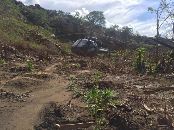 Polícia Federal acha 23 mil pés de maconha durante operação