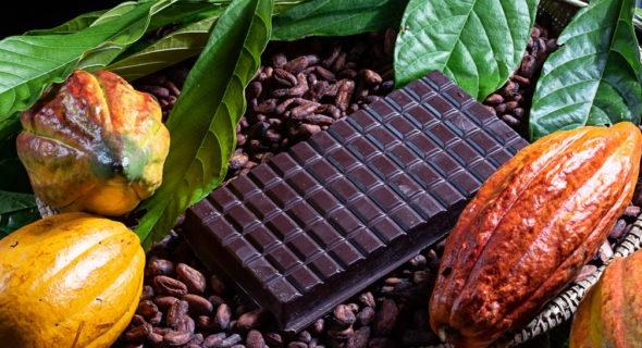 Investimentos na cadeia produtiva de cacau e chocolate qualifica a produção baiana