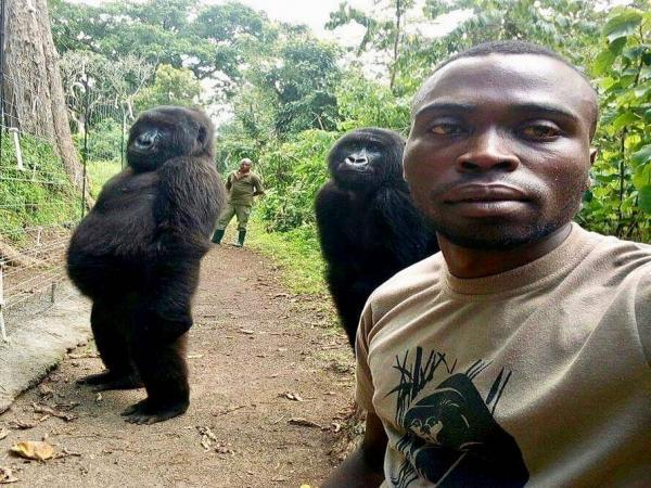 Gorilas posam para 'selfie' com guardas florestais e viralizam na web