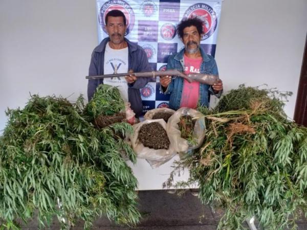 Roça com mais de 500 pés de maconha é encontrada em Jaguaquara