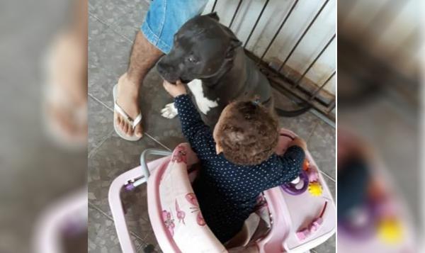 Bebê de um ano morre após ser atacado por pit bull dentro de casa na Bahia