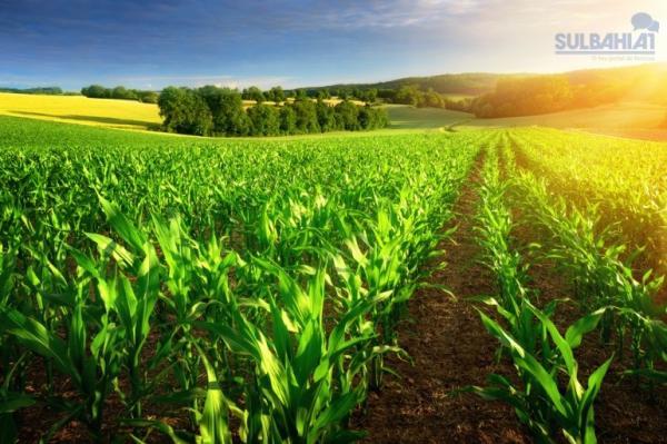 AgroNordeste: Agropecuária ganha plano para desenvolvimento