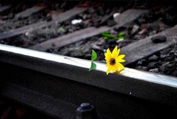 Servidora de Piraí do Norte comete suicídio