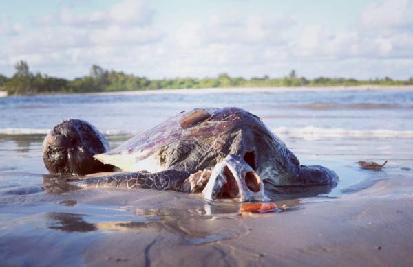 Valença: Tartaruga é encontrada morta em praia do Taquarí