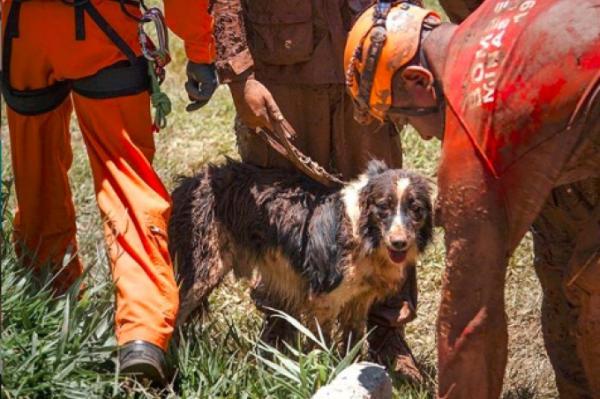 Cachorro que localizou vítimas em Brumadinho e Mariana morre em MG