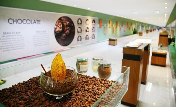 Cacau da Bahia concorre a prêmio internacional no Salão de Chocolate em Paris