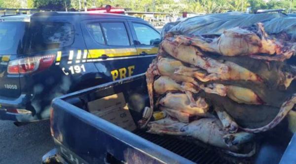 Ubaitaba: Polícia apreende 1 tonelada de carne transportada irregularmente
