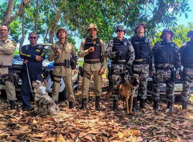 PM de Valença tem os únicos cães altamente certificados para busca de pessoas