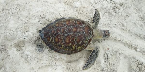 Tartaruga é encontrada morta em praia de Ilhéus