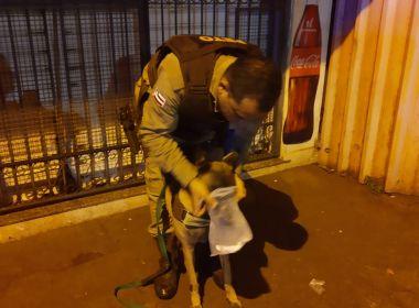 Valença: Policiais localizam acusado de homicídio com ajuda de cadela treinada