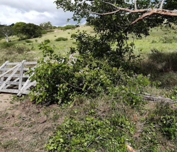 Propriedade em zona rural de Amargosa tem 21 cabeças de gado furtadas