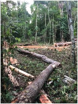 Crime ambiental: Ex-prefeito de Gandu é denunciado ao INEMA.