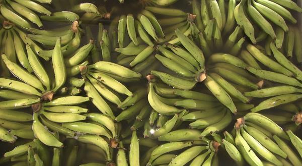 Frutas do Baixo Sul em alta; produção ganha mercado baiano e nacional